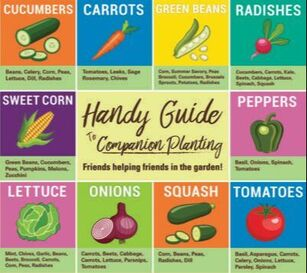 companion planting chart for gardens